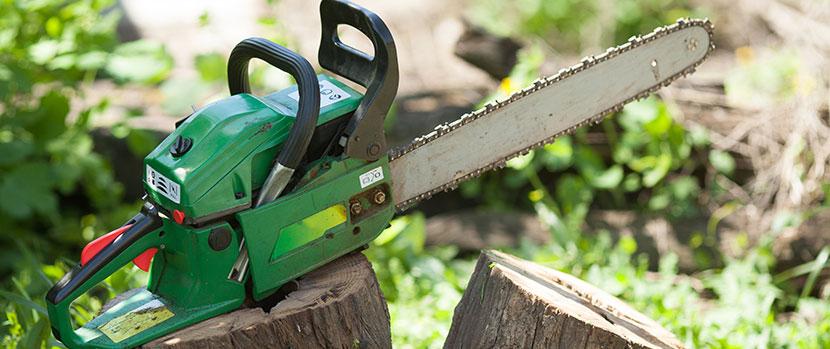 Fem tjänster för att ta hand om dina träd